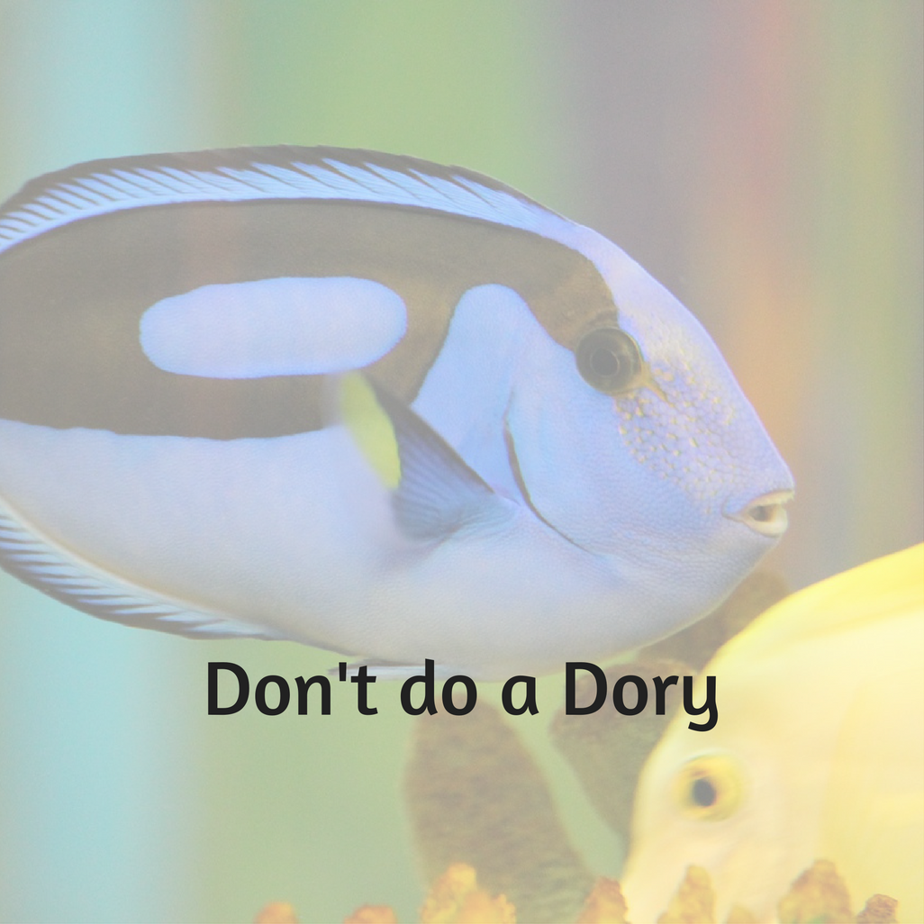 Photo of blue tang fish